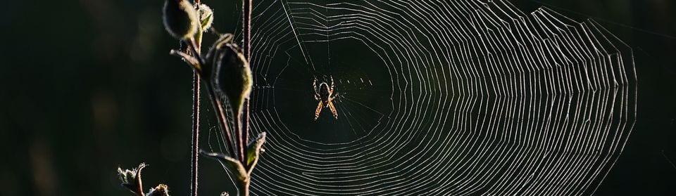 Spinnen bestrijden Utrecht | Spinnenplaag snel verholpen
